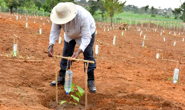 President-Museveni-demonstrating-drip-irrigation-at-the-Kityerela-Presidential-Demo-Farm-Mayuge.-640x381